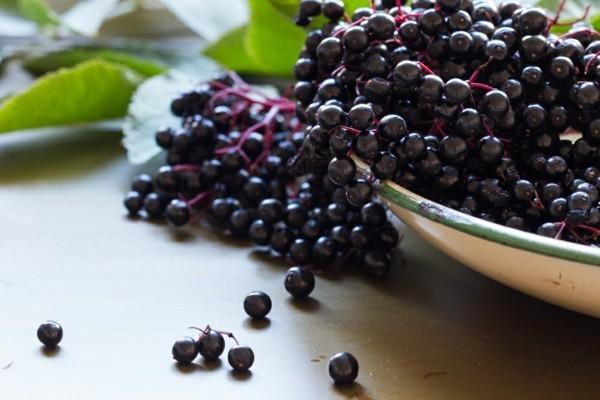 acaibeere früchte