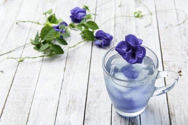 blaues getränk clitoria ternatea