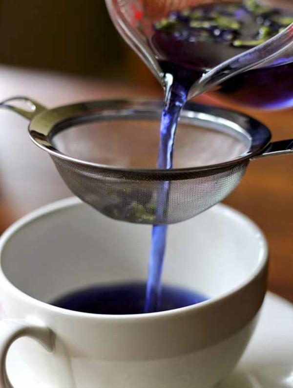 blaues getränk tee clitoria ternatea