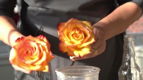 rosen konservieren anleitung mit wachs