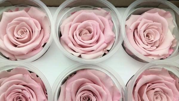 rosen konservieren anleitung tipps