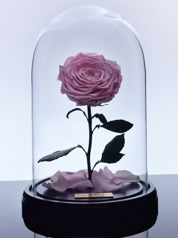 rosen konservieren geschenkidee