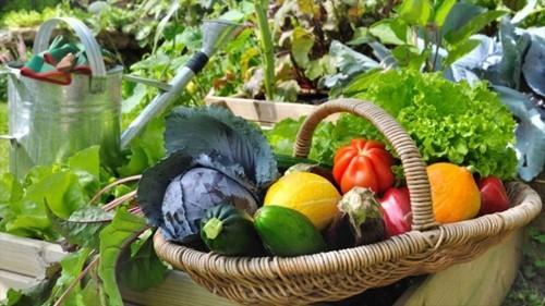 salat ideen gesundes essen