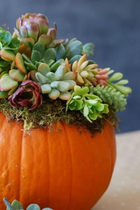 Auffallende Tischdeko im Herbst Sukkulenten im Kürbis