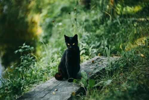 Schwarze Katze am see