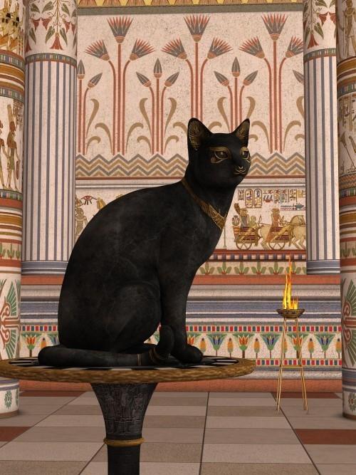 Schwarze Katze bast