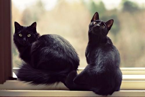 Schwarze Katze fell lang kurz