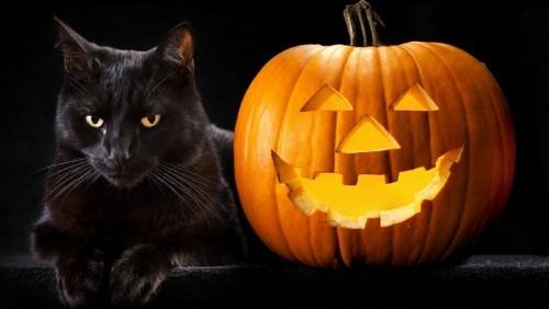 Schwarze Katze grusel
