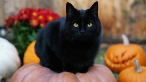 Schwarze Katze halloween