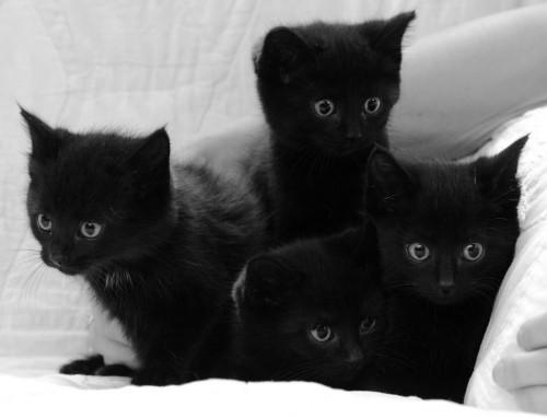 Schwarze Katze kätzchen