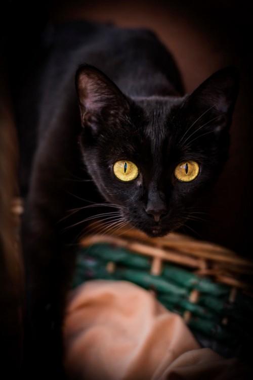 Schwarze Katze korb