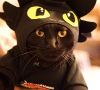 Schwarze Katze adoptieren und sich als Glückspilz zählen