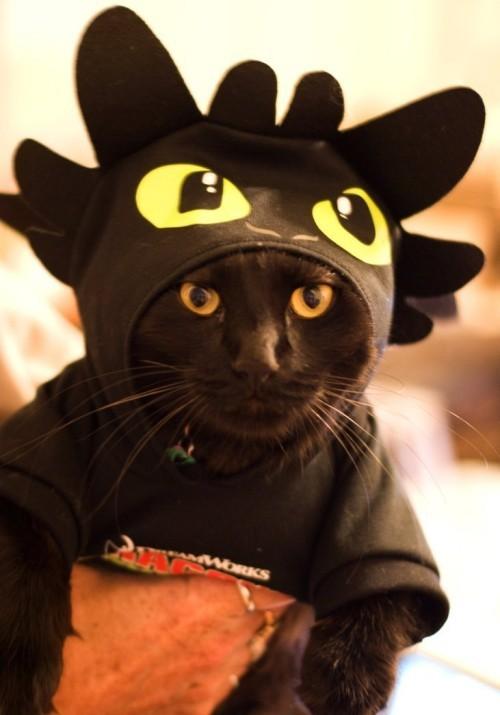 Schwarze Katze kostüm