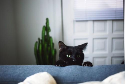 Schwarze Katze lustig