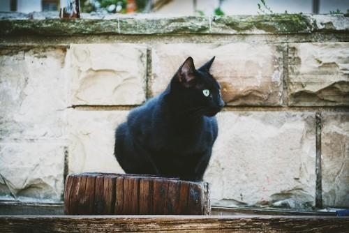 Schwarze Katze schön