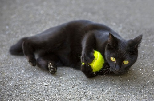Schwarze Katze spiel
