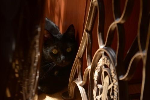 Schwarze Katze verschmelzen