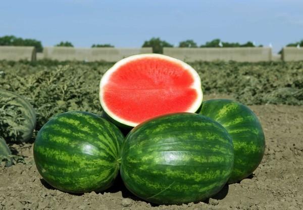 wassermelone lecker tolle ideen gesundes leben