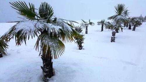 winterharte Palmen feld