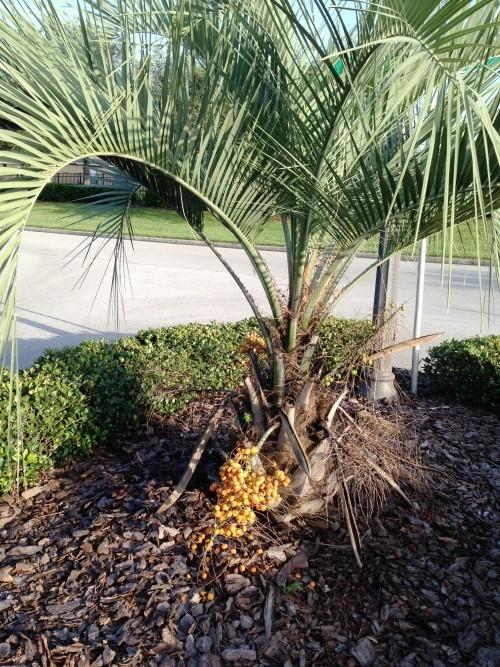 winterharte Palmen garten