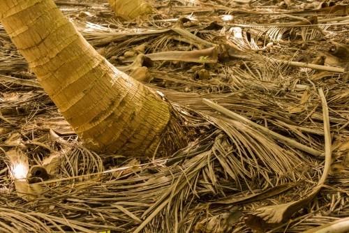 winterharte Palmen laub