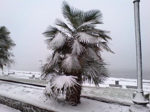 winterharte Palmen meer