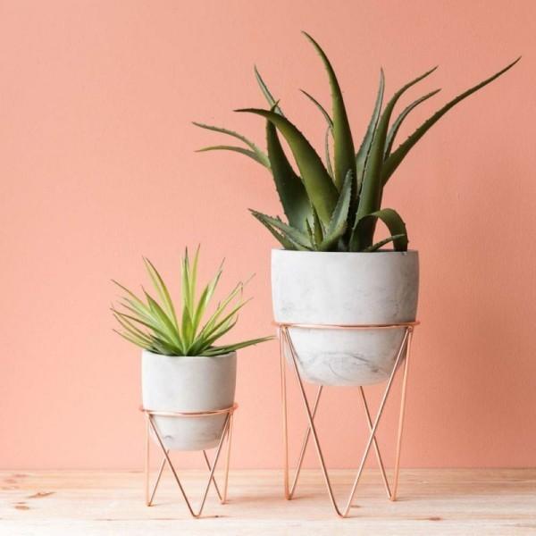 Ideen für Zimmerpflanzen-Deko Aloe Vera sehr eyecatching schöner Hintergrund weiße Töpfe