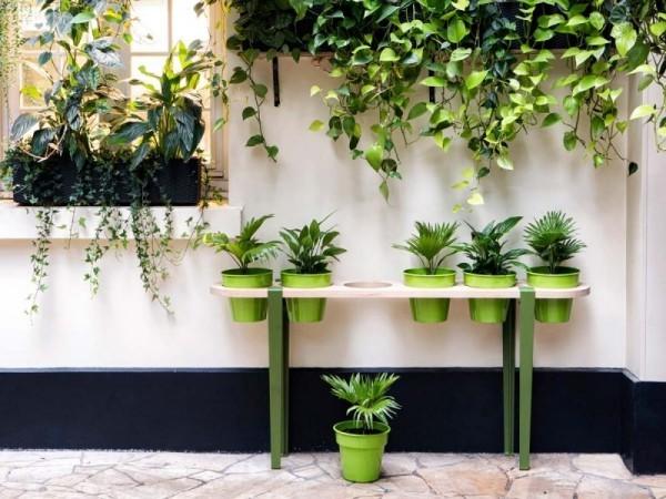 Ideen für Zimmerpflanzen-Deko Hängepflanzen plus andere grüne Wand grüne Ecke draußen