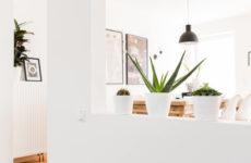 Ideen Für Zimmerpflanzen Deko, Die Eine Neue Ästhetik Präsentieren