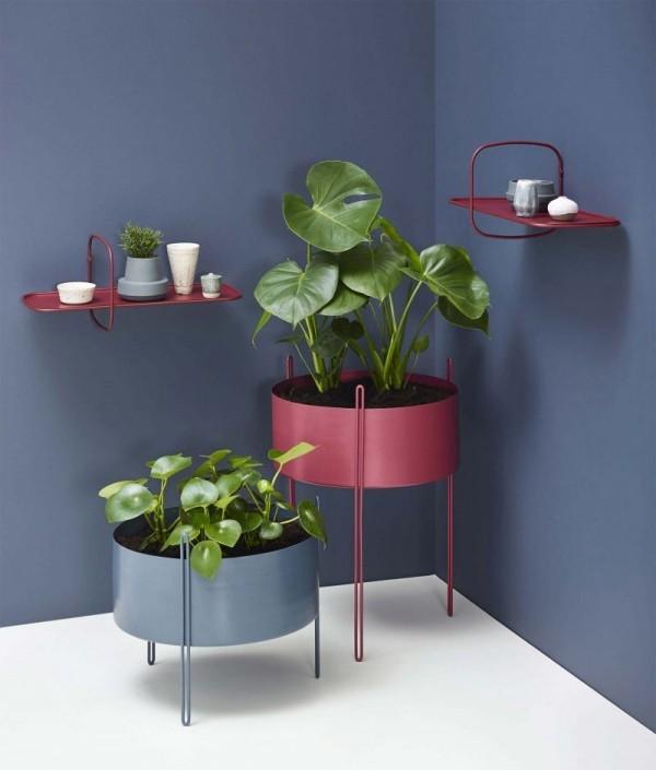 Ideen für Zimmerpflanzen-Deko dunkelblauer Hintergrund Topfpflanzen kommen gut zum Vorschein
