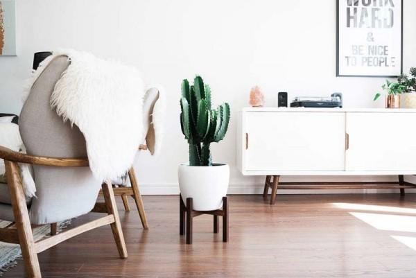 Ideen für Zimmerpflanzen-Deko ein einziger Kaktus im weißen Wohnzimmer schöner Blick