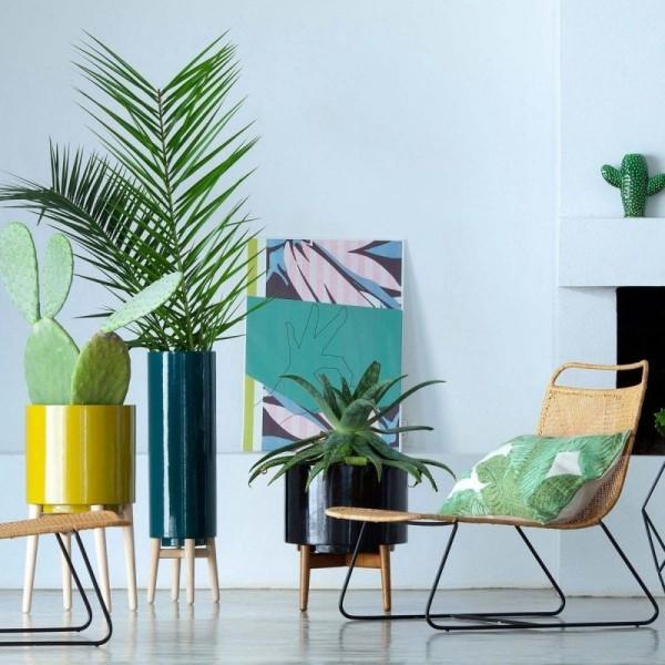 Ideen für Zimmerpflanzen-Deko grüne Zimmerpflanzen Blumentöpfe