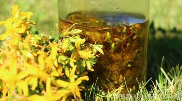 Kräuter Johanniskraut gelbe Blüten Heilmittel aus der Natur