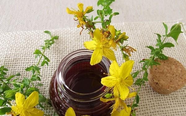 Kräuter Medizin aus der Natur Johanniskraut verbessert den Schlaf
