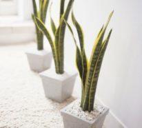 Luftreinigende Pflanzen für gesunde, strahlende Haut