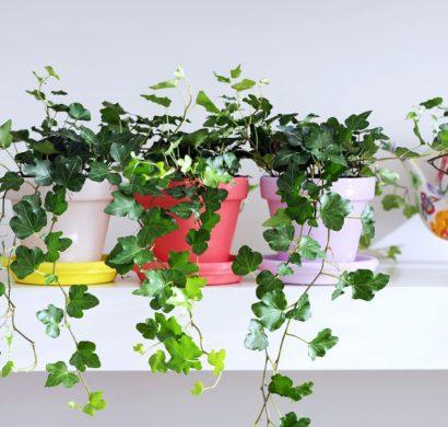Luftreinigende Pflanzen für gesunde, strahlende Haut - Fresh Ideen ...