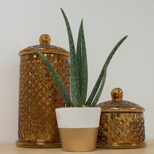 Luftreinigende Pflanzen perfekte dekorative Ergänzung überall hingestellt