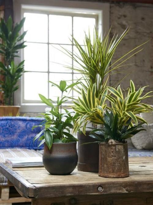 Luftreinigende Pflanzen zu Hause pflegen tolles Arrangement einige Topfpflanzen zusammengestellt