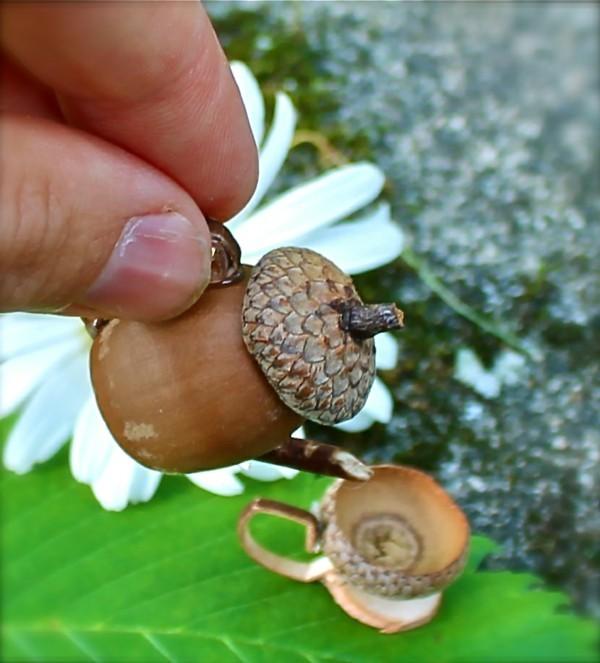 miniatur basteln mit eicheln