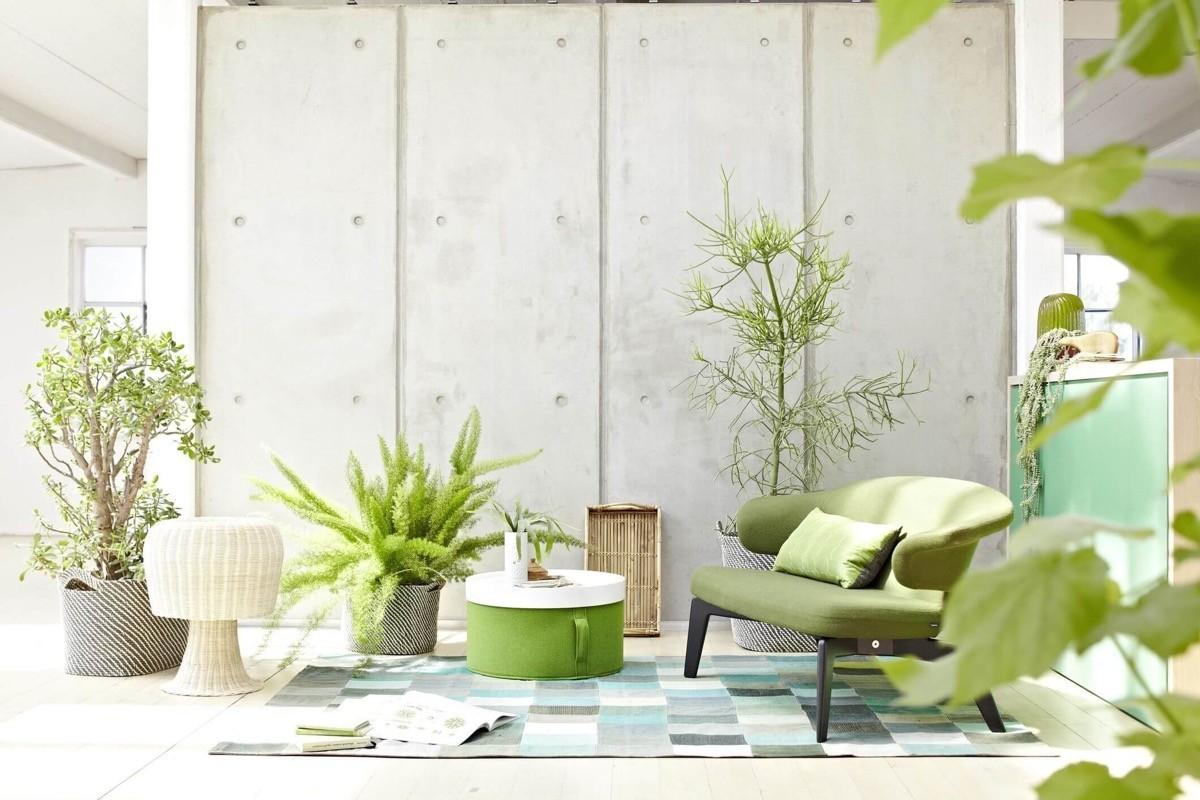 wohnzimmer farben dezente pflanzliche akzente