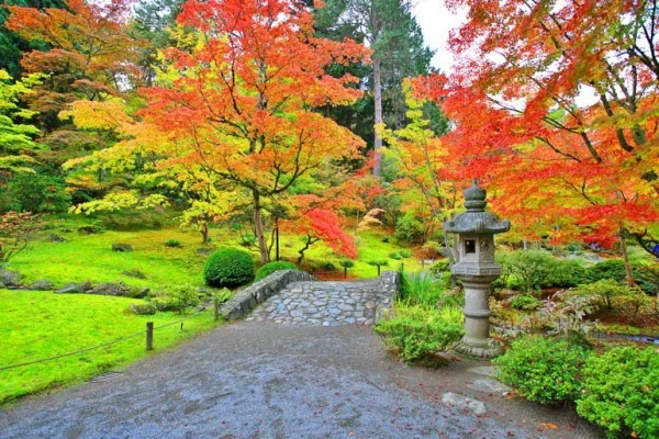 Japanischer Ahorn schöne Natur beeindruckende Formen und Farben