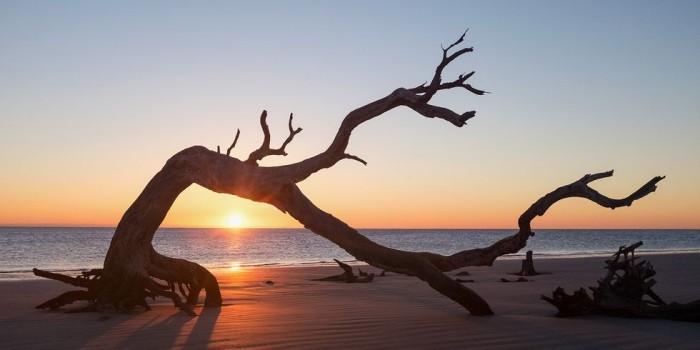 Schönste Strände der Welt Driftwood Beach Georgia USA