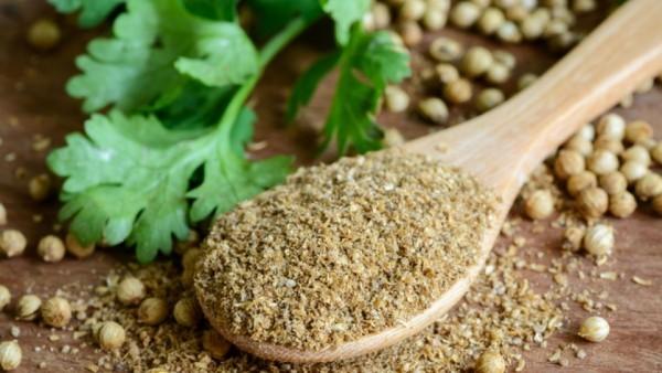 Kräuter für Detox Koriander Blätter Medizin aus dem Garten