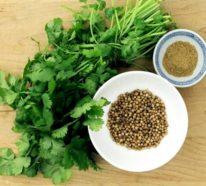 Kräuter für Detox – damit können Sie den Körper erfolgreich entgiften!