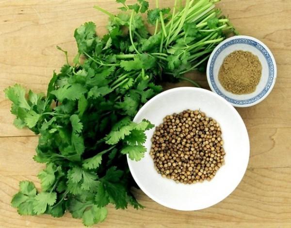 Kräuter für Detox Koriander alle Pflanzenteile verzehrbar