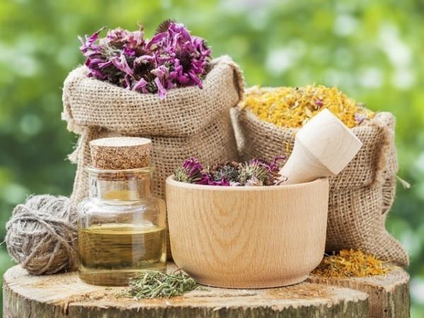 Kräuter für Detox Mariendistel Medizin aus der Natur