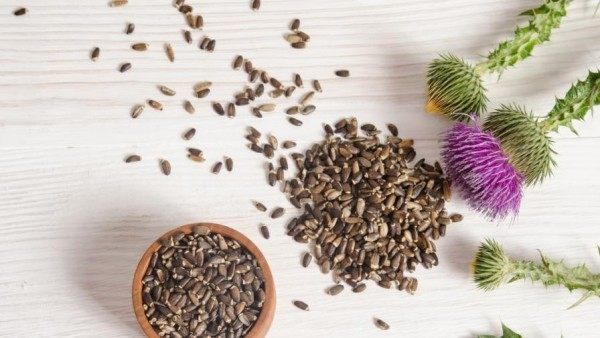 Kräuter für Detox Mariendistel Samen entschlackenden Tee zubereiten