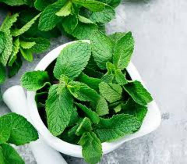 Kräuter für Detox Minze grüne Blätter Heilkraft der Natur
