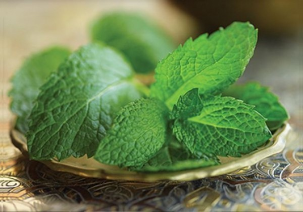 Kräuter für Detox grüne Blätter frischer Duft Minze