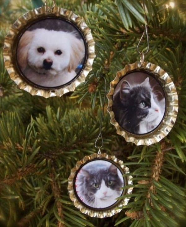 foto geschenke bilder mit hunden und katzen